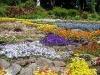villa-carlotta-flower